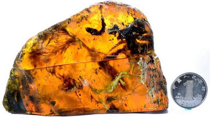 Ученые обнаружили птенца внутри янтаря возрастом 100 миллионов лет