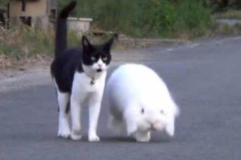 Очень дружная семья: мама — кошка, сыночек — кролик