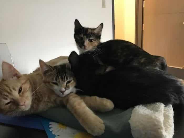 Кот – психотерапевт для собак в ветеринарной клинике