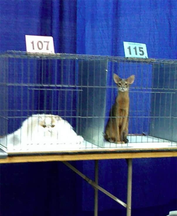 Один кот с севера, другой с юга. У них разная температура плавления