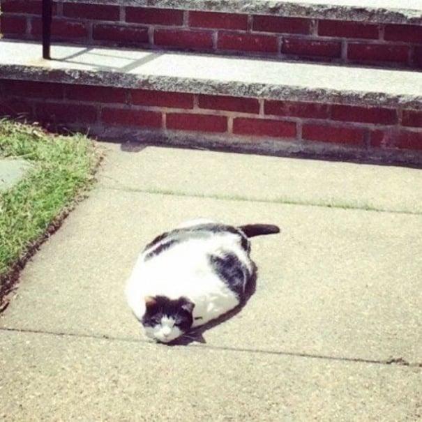 «У входа должен лежать коврик», — сказал кот и лег…