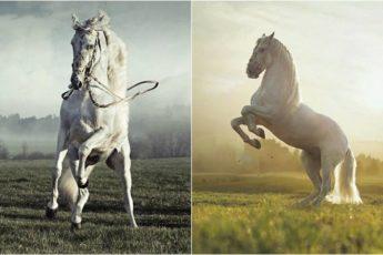 великолепные лошади на фотографиях Конрада Бонка.