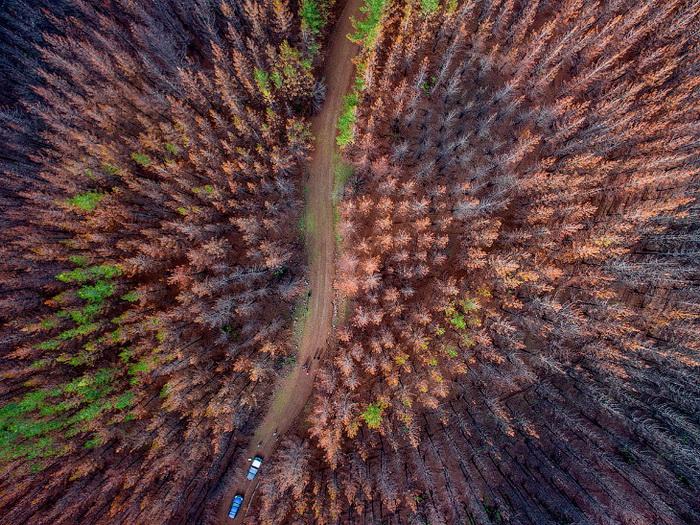 Вот так выглядят сгоревшие леса с высоты… (Фото Martin Bernetti)