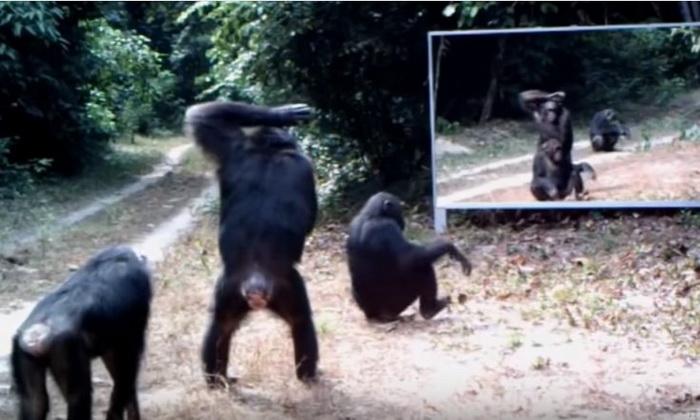 Что будет если установить зеркало в джунглях
