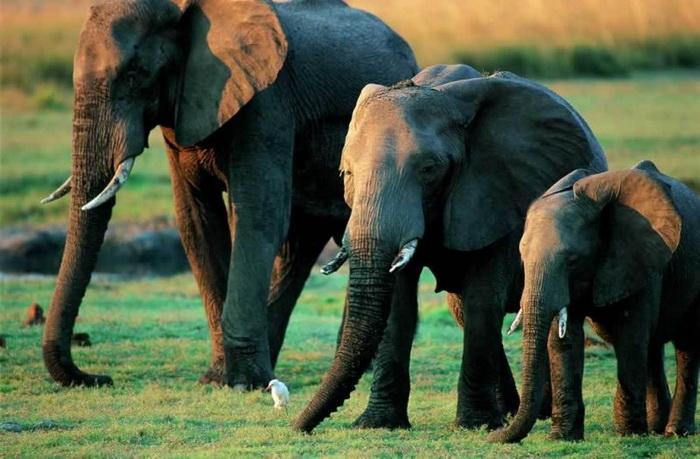 Подборка самых неуклюжих и милых слоников