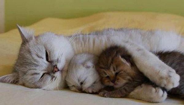 Крошка-котенок повторяет все за своей мамой