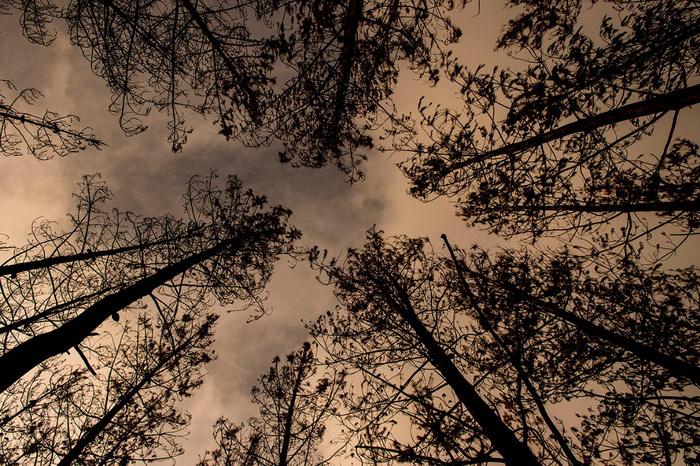 … и с земли. (Фото Martin Bernetti)
