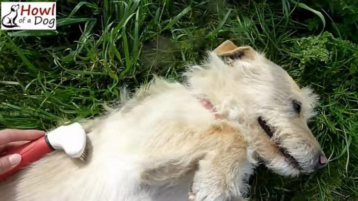 Что будет если полюбить злую собаку