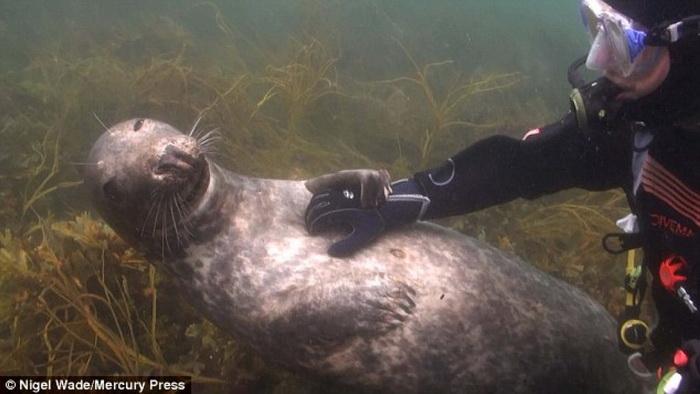 Тюлень схватил аквалангиста за руку и не хочет отпускать