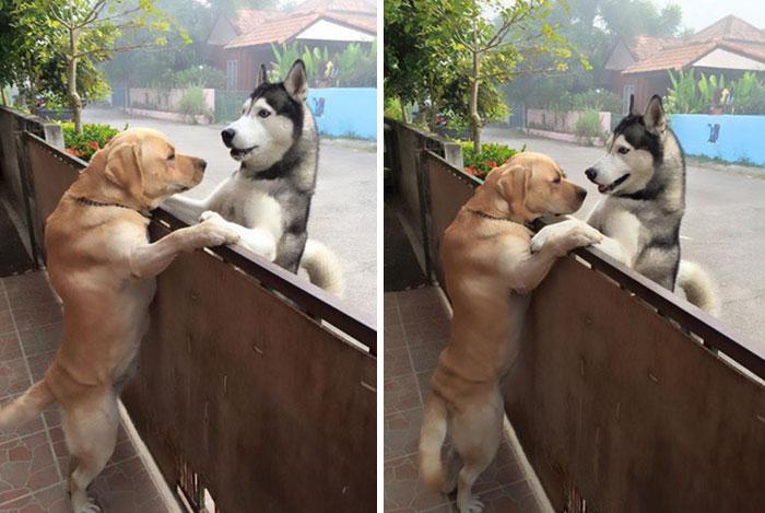 Трогательная история пса