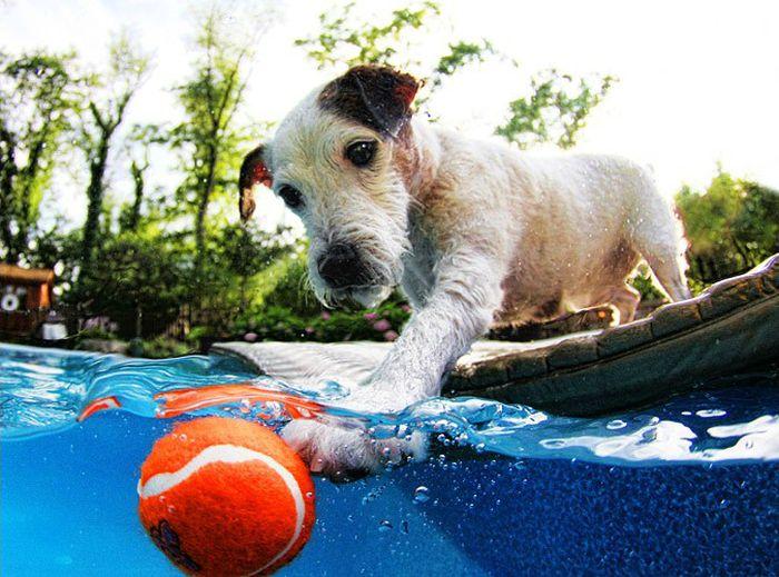 Пес придумал себе увлекательную игру в мяч