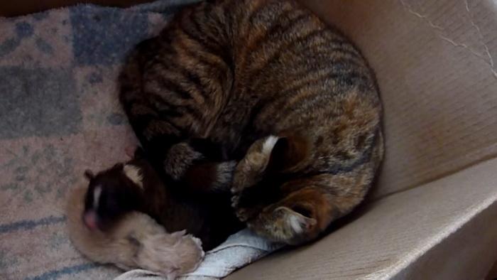 Они принесли щенка к маме-кошке и её котятам