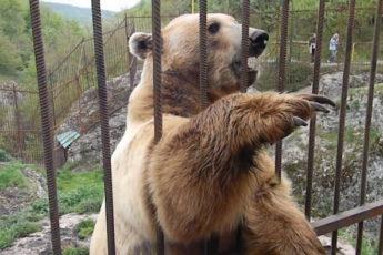 Самый стеснительный медведь Тимофей
