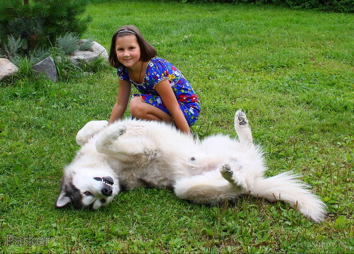 Собака рычит на хозяина за то, что тот перестает чесать ему бочок