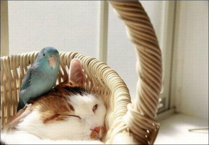 Попугай разбудил кота и вывел из себя