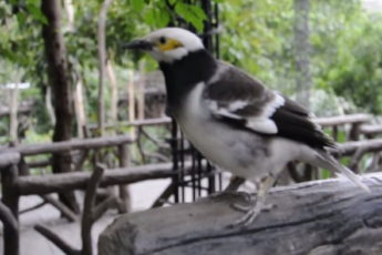 Парень решил заговорить с птицей
