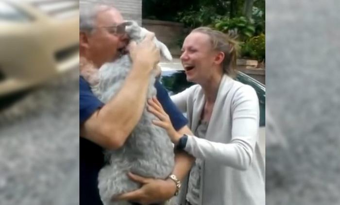 Собака упала в обморок от счастья