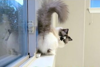 Кот идет лунной походкой Майкла Джексона