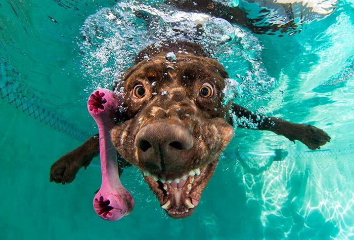 Как щенки спасали любимую утонувшую игрушку