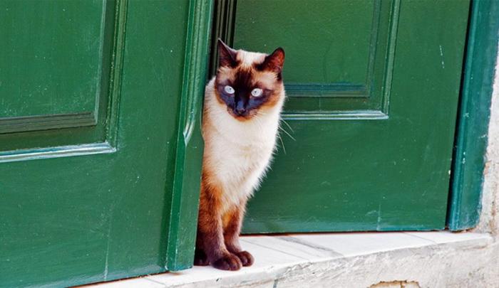 Кошка звонит в звонок, чтобы попасть домой