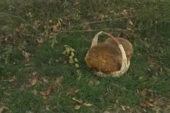Краснодарец нашел 9-килограммовый гриб