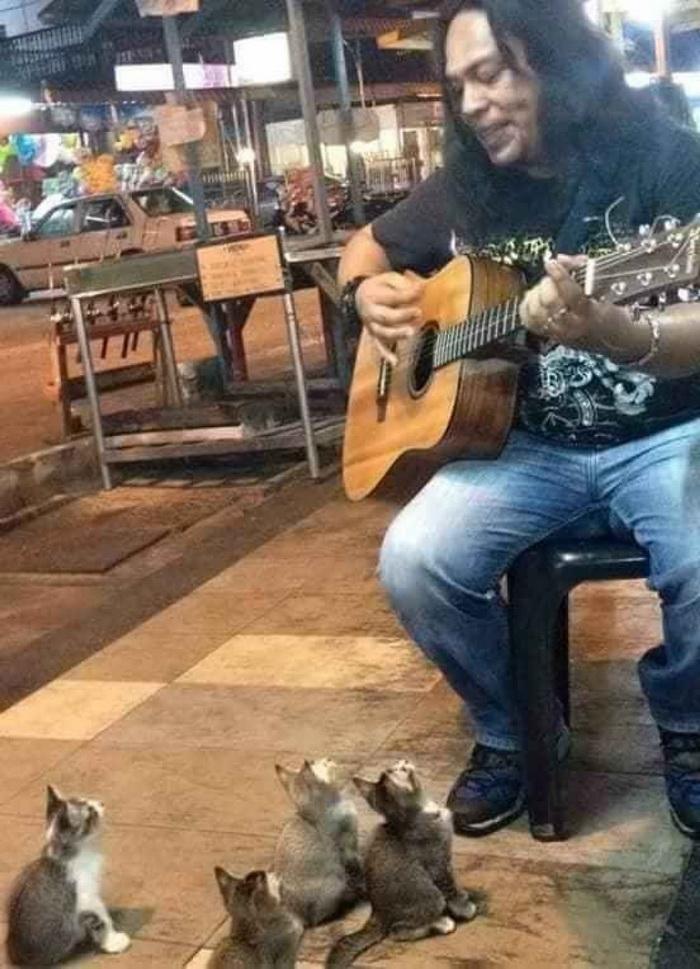 Уличный музыкант исполняет котятам серенады.