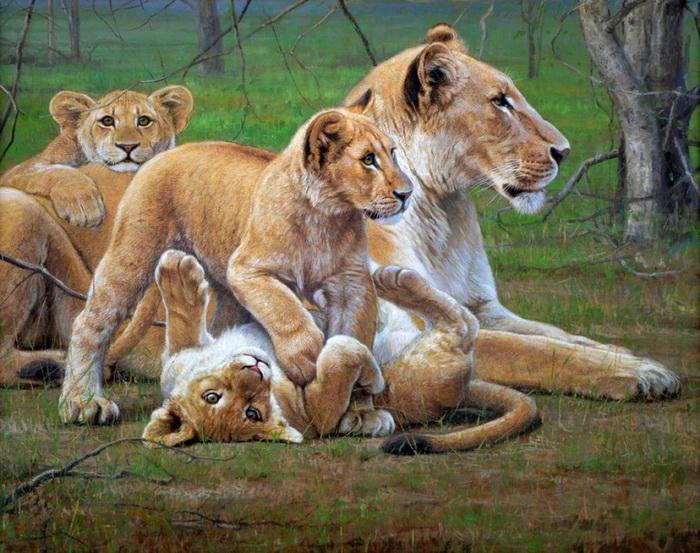 Львица защитила лисенка от голодного льва