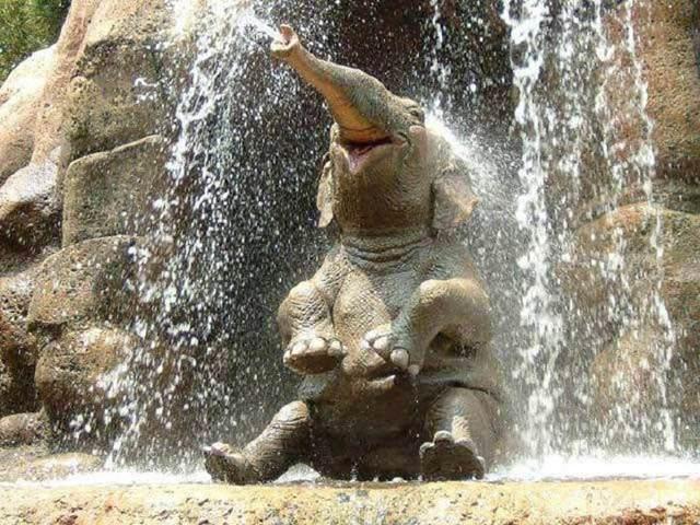 Неуклюжий слоненок гоняется за ласточками