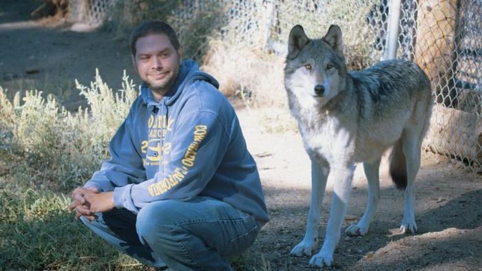 Бывшие военные проходят реабилитацию в… стае волков