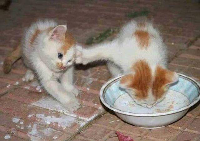 «Боря, отдай булку!»