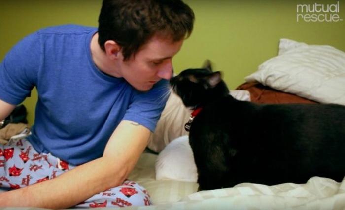 Незнакомый кот бросился под ноги к парню