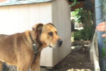 10 лет этот пёс сидел на цепи