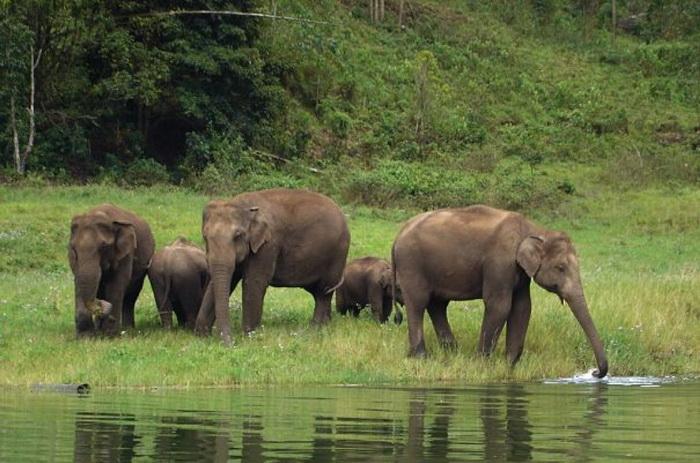 История о том, как слоненок себе папу выбирал