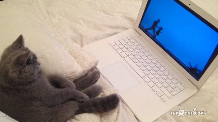 Кот есть кот