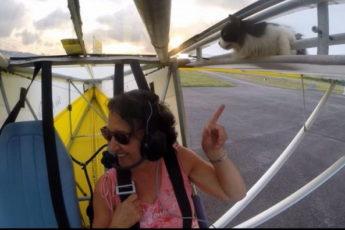 Аэроплан взлетел с котом на крыле