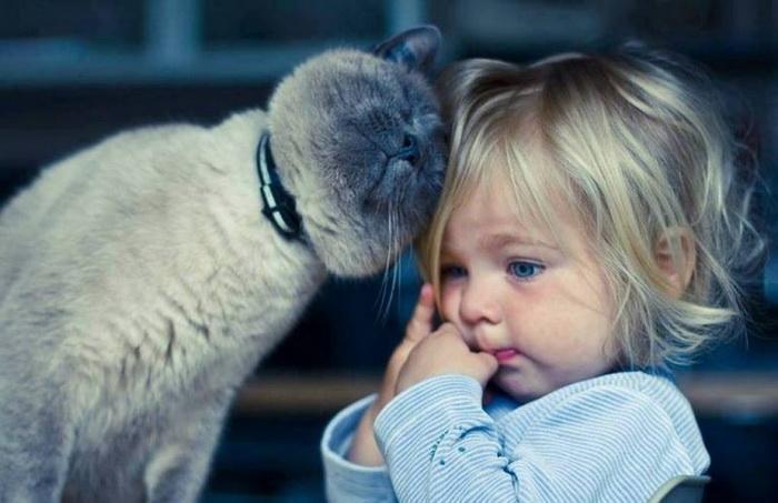Кот заступился за ребенка