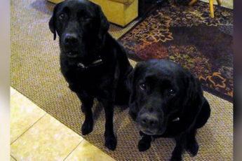 Пёс сдал свою сестру на краже печенья