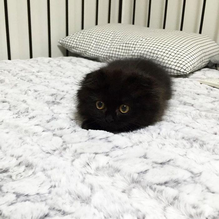 Котик Джимо
