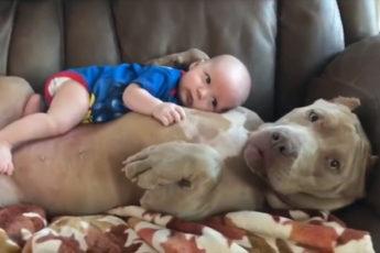 Собаки-няньки заботятся о детях