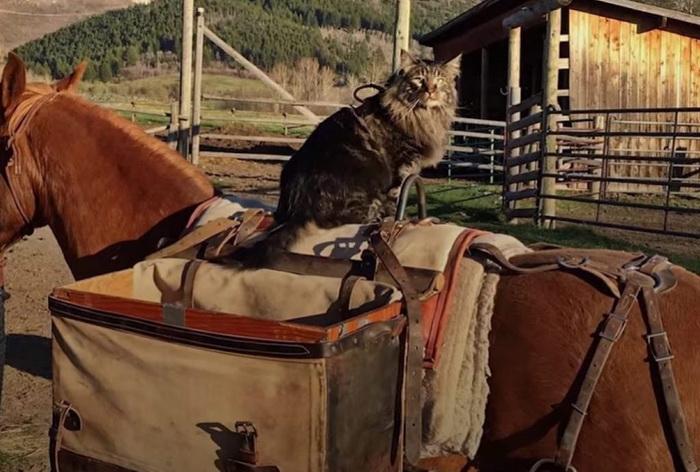 Этот кот — заядлый путешественник и любитель приключений!