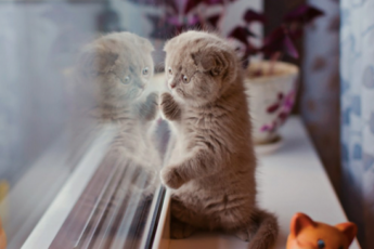 Скучают ли кошки в отсутствие хозяев