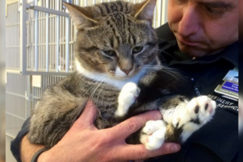 Мужчина забрал из приюта кота с огромными лапами