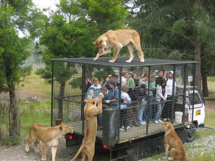 В этом зоопарке точно знают, кого нужно держать в клетках
