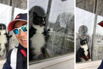 «Жестокое» нападение кота на почтальона