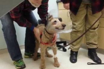 Слепая собака после операции первый раз видит своих хозяев
