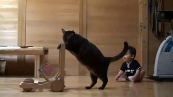 Кошка научила ребенка ходить