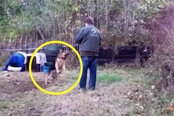 Что будет, если освободить собаку, просидевшую всю жизнь на цепи