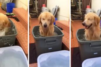 Самый счастливый лабрадор в мире принимает ванну