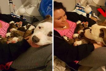Женщина приютила собаку