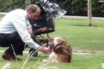 Фотографии мужчины и его собаки разлетелись по всему миру